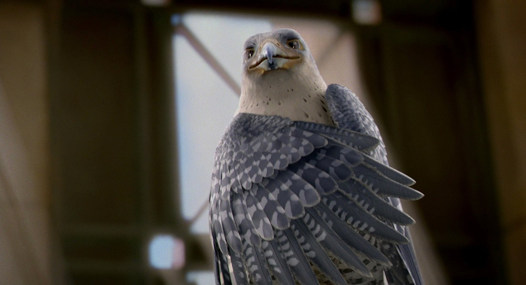 Watch Movies And Tv Shows With Character Falcon For Free List Of Movies Stuart Little 2