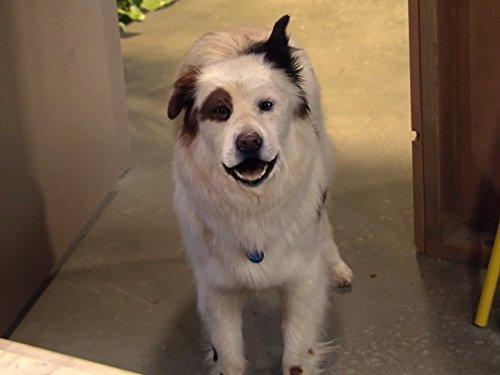Dog with a Blog - Season 1